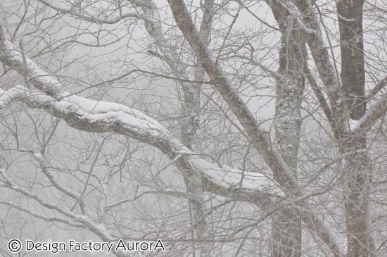 豪雪の金剛山